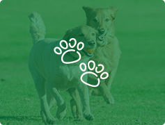 Two dogs running with paw prints overlay