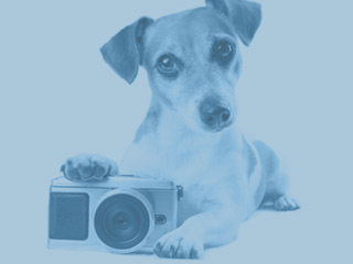 Dog with camera greyed out